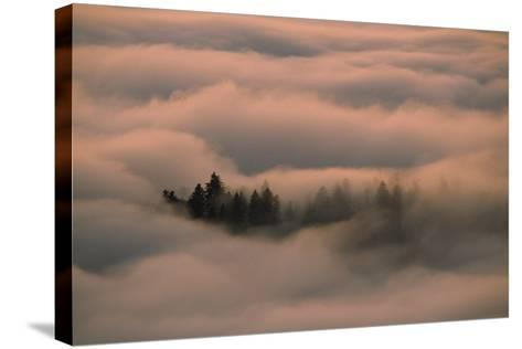 Islands of Trees Peaking Out of Thick Layer of Clouds in the Valley-Norbert Rosing-Stretched Canvas Print