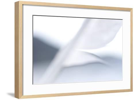 Abstract of Gull's Feather in the Mono Basin National Forest-Philip Schermeister-Framed Art Print