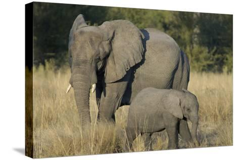 Two Elephants, Adult and Calf, Upper Vumbura Plains, Botswana-Anne Keiser-Stretched Canvas Print