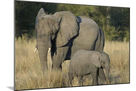 Two Elephants, Adult and Calf, Upper Vumbura Plains, Botswana-Anne Keiser-Mounted Photographic Print