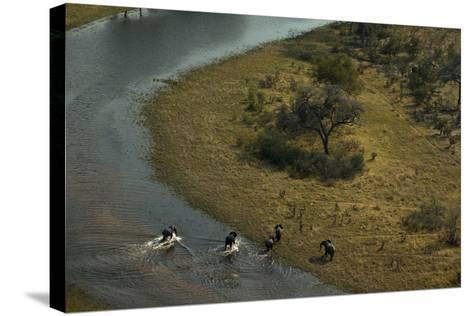 A Herd of an African Elephant, Loxodonta Africana, Cross a Waterway-Beverly Joubert-Stretched Canvas Print