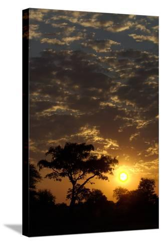 Sunset, Upper Vumbura Plains, Botswana-Anne Keiser-Stretched Canvas Print
