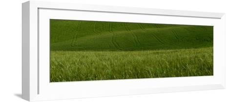 Wheat Fields in Tuscany-Raul Touzon-Framed Art Print