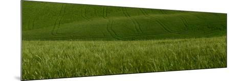 Wheat Fields in Tuscany-Raul Touzon-Mounted Photographic Print