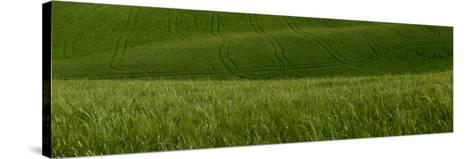 Wheat Fields in Tuscany-Raul Touzon-Stretched Canvas Print