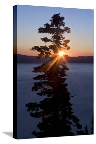Silhouette of Coniferous Tree Near Crater Lake in Crater Lake National Park, Oregon-Philip Schermeister-Stretched Canvas Print