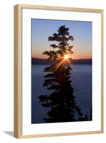 Silhouette of Coniferous Tree Near Crater Lake in Crater Lake National Park, Oregon-Philip Schermeister-Framed Art Print