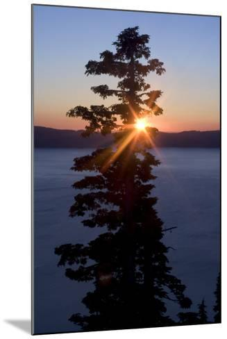 Silhouette of Coniferous Tree Near Crater Lake in Crater Lake National Park, Oregon-Philip Schermeister-Mounted Photographic Print