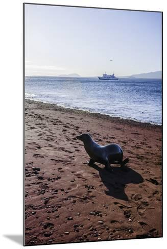 A Galapagos Sea Lion on the Red Sand Beach of Rabida Island-Jad Davenport-Mounted Photographic Print