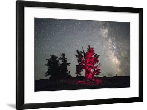 A Illuminated Bristlecone Pine Tree Beneath the Milky Way in Inyo National Forest-Bill Hatcher-Framed Art Print