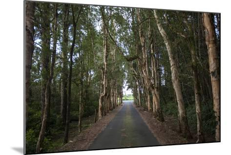 Tree-Lined Road to Alexandria Falls Lookout-Gabby Salazar-Mounted Photographic Print