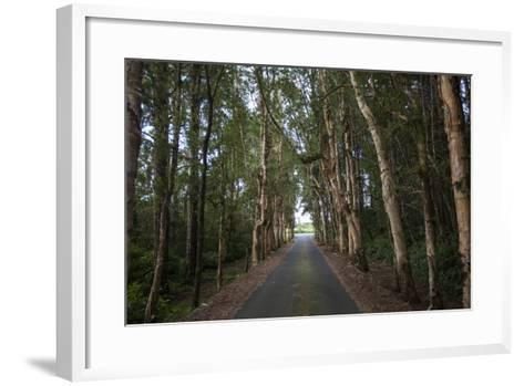 Tree-Lined Road to Alexandria Falls Lookout-Gabby Salazar-Framed Art Print