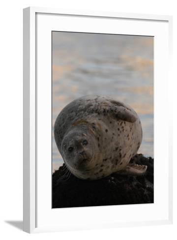 Portrait of a Harbor Seal-Jeff Wildermuth-Framed Art Print