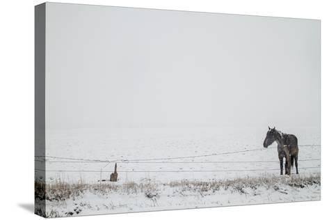 A Horse on a Ranch in Montana-Cory Richards-Stretched Canvas Print
