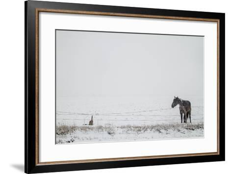 A Horse on a Ranch in Montana-Cory Richards-Framed Art Print