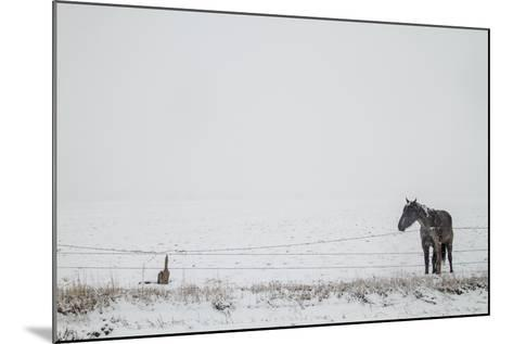 A Horse on a Ranch in Montana-Cory Richards-Mounted Photographic Print