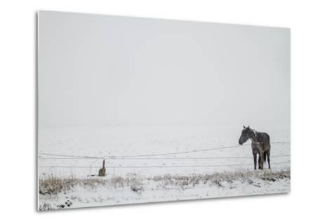 A Horse on a Ranch in Montana-Cory Richards-Metal Print