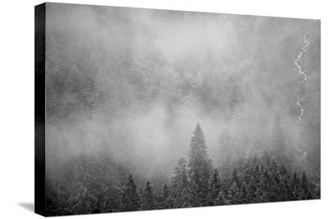 Morning Fog Rises Off of a Spruce, Picea, Forest in Alaska's Inside Passage-Erika Skogg-Stretched Canvas Print