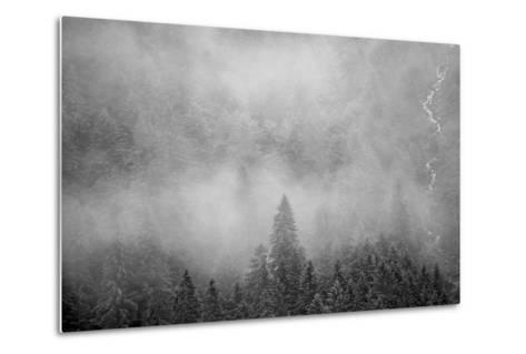 Morning Fog Rises Off of a Spruce, Picea, Forest in Alaska's Inside Passage-Erika Skogg-Metal Print