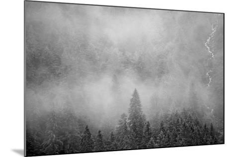 Morning Fog Rises Off of a Spruce, Picea, Forest in Alaska's Inside Passage-Erika Skogg-Mounted Photographic Print