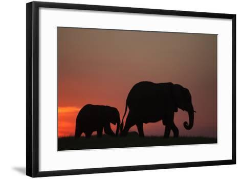 The Silhouette of an African Elephant with its Calf Walking at Sunset-Beverly Joubert-Framed Art Print