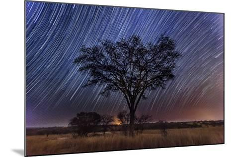 Star Trails Light the Sky Above an Acacia Tree-Matthew Hood-Mounted Photographic Print