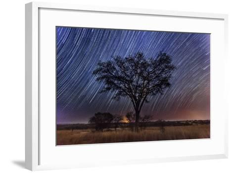 Star Trails Light the Sky Above an Acacia Tree-Matthew Hood-Framed Art Print