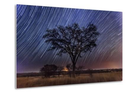 Star Trails Light the Sky Above an Acacia Tree-Matthew Hood-Metal Print