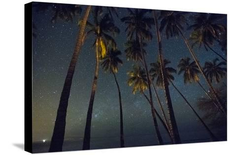 Starry Night in the Kapuaiwa Coconut Grove-Jonathan Kingston-Stretched Canvas Print