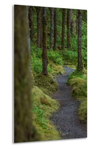 A Trail Leads Through the Forest in Glacier Bay National Park-Erika Skogg-Metal Print
