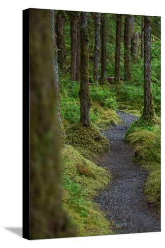 A Trail Leads Through the Forest in Glacier Bay National Park-Erika Skogg-Stretched Canvas Print