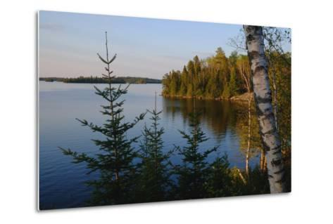 Trees Along the Eva Lake in Ontario, Canada-Paul Damien-Metal Print