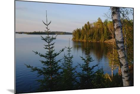 Trees Along the Eva Lake in Ontario, Canada-Paul Damien-Mounted Photographic Print