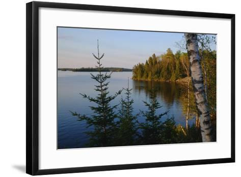 Trees Along the Eva Lake in Ontario, Canada-Paul Damien-Framed Art Print