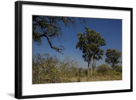 A Leopard, Panthera Pardus, Resting on a Tree Branch-Beverly Joubert-Framed Art Print