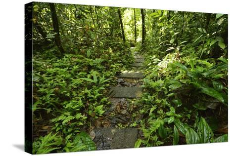 Research Trail Through the Tropical Forest of Barro Colorado Island, Panama-Jonathan Kingston-Stretched Canvas Print