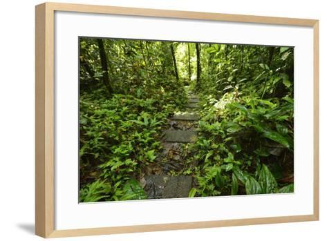 Research Trail Through the Tropical Forest of Barro Colorado Island, Panama-Jonathan Kingston-Framed Art Print