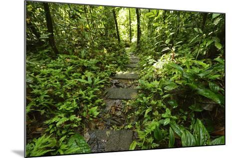Research Trail Through the Tropical Forest of Barro Colorado Island, Panama-Jonathan Kingston-Mounted Photographic Print