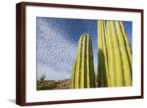 Close Up of Cacti Against a Cloud Studded Blue Sky-Michael Melford-Framed Art Print