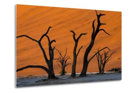 Dead Acacia Trees Silhouetted Against Sand Dunes at Deadvlei in Namibia-Alex Treadway-Metal Print