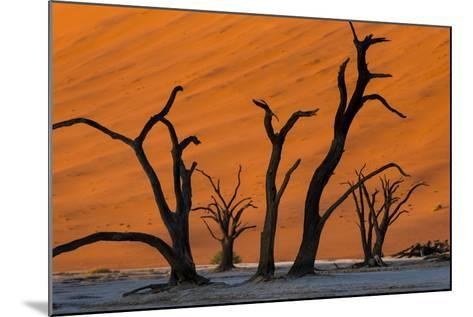Dead Acacia Trees Silhouetted Against Sand Dunes at Deadvlei in Namibia-Alex Treadway-Mounted Photographic Print