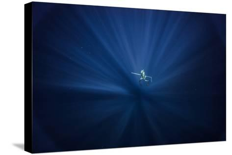 A Free Diver Spearfishes Off the Coast of Cat Island in the Bahamas-Andy Mann-Stretched Canvas Print