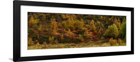 Fall Foliage in Thingvellir National Park, Iceland-Raul Touzon-Framed Art Print