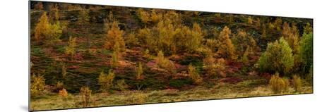 Fall Foliage in Thingvellir National Park, Iceland-Raul Touzon-Mounted Photographic Print