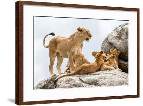 Lioness, Panthera Leo, with its Cubs on a Rock-Tom Murphy-Framed Art Print