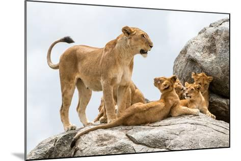 Lioness, Panthera Leo, with its Cubs on a Rock-Tom Murphy-Mounted Photographic Print