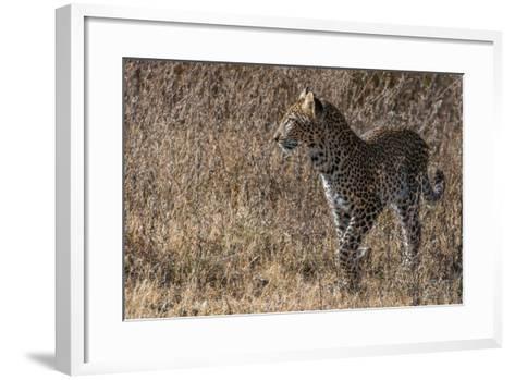 A Leopard, Panthera Pardus, in Serengeti National Park-Tom Murphy-Framed Art Print