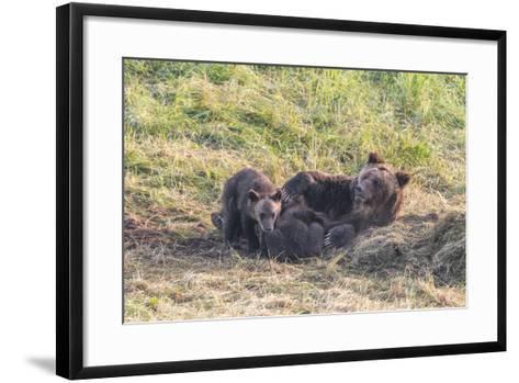 Brown Bear, Ursus Arctos, with its Cub Resting in Grass-Tom Murphy-Framed Art Print