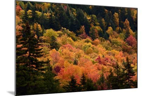 Scenic View from the Kancamagus Highway in the White Mountains of New Hampshire-Darlyne Murawski-Mounted Photographic Print