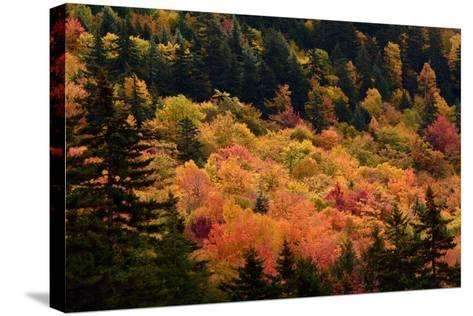 Scenic View from the Kancamagus Highway in the White Mountains of New Hampshire-Darlyne Murawski-Stretched Canvas Print